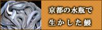 京都の水瓶で生かした鰻